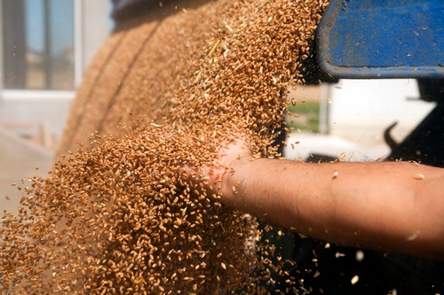 Purchasing Malt Handling Equipment for Your Brewery - Featured Image