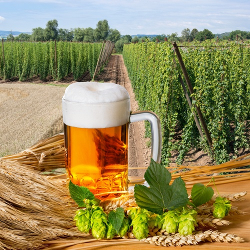 Quality Management and Traceability in Brewing - Featured Image