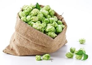 Selecting the Right Hops and Hops Vendor - Featured Image